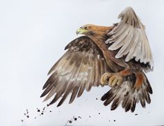 Olga Beliaeva Watercolours - Paintings for Sale Watercolor Paintings For Sale, Watercolor Bird, Buy Paintings, Watercolor Animals, Eagle In Flight, Birds In Flight, Dojo, Phoenix Tattoo Design, Jesus Painting
