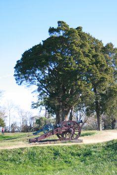 Yorktown Battlefield, Yorktown, Virginia.
