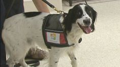 Woman's best friend: Dogs being trained to sniff out ovarian cancer...
