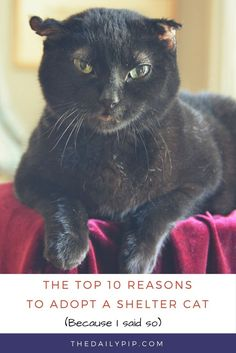 10 Reasons to Adopt a Shelter Cat