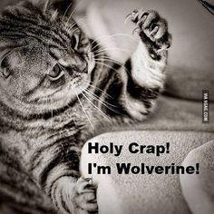 Holy Crap! I'm Wolverine!
