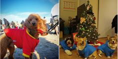 PrideBites Hoodies — Here Are The Most Awesome Dog Gifts You Haven't Seen Yet