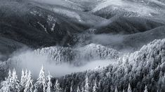 Frozen Transylvania, the last real wild retreat of Europe Frozen, Waves, Europe, World, Ocean Waves, The World, Beach Waves, Wave