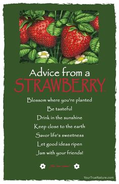 Advice from a Strawberry Frameable Art Card – Your True Nature, Inc. Advice Quotes, Me Quotes, Advice Cards, Strawberry Quotes, Garden Quotes, True Nature, Nature Quotes, Spirit Guides, Good Advice
