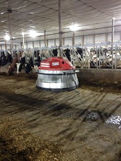 Lely Juno is a robot that pushes the cows feed closer. Robotic Milking Barn at Northeast Iowa Dairy Foundation. Construction completed December 2013. Www.iowadairycenter.com