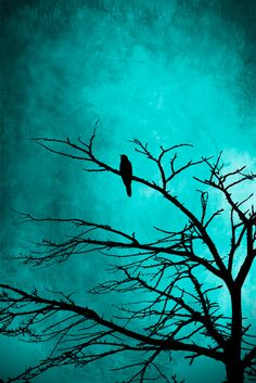 turquoise night song bird