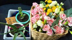 Entregas especiais do dia: família Barros viajam ao lado das flores pro @casaramona  #oitominhocas #suculentas #suculovers #arranjofloral #familiabarros #decoração #plantinhas #floweroftheday