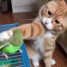Video Mother Cat and Cute Kittens - Best Family Cats Comilation 2019 - Funny Animal Videos, Cute Funny Animals, Funny Animal Pictures, Cute Baby Animals, Funny Cats, Cute Baby Cats, Fluffy Kittens, Cute Kittens, Kitten Gif