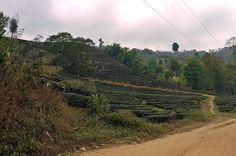 Chiang Rai : 2ème jour de trek