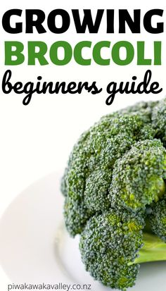 Broccoli is one of the best plants for beginner gardeners to learn to grow in their vegetable garden. It is easy to grow, and fairly hardy. Brassica oleracea italica is the botanical name for broccoli, Broccoli Plant, Growing Broccoli, Growing Vegetables At Home, Types Of Vegetables, Planting Vegetables, Vegetable Garden Design, Vegetable Gardening, Container Gardening, Gardens