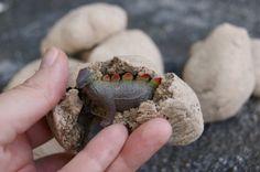 Dinosaurios fósiles