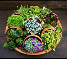 Succulent plants turned sideways on a large tray