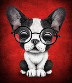 Cute French Bulldog Puppy with Glasses on Deep Red