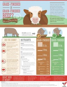 Helping you understand the differences of grass-finished vs. This is good to share with all the grass fed beef craze. I love the marbling that grain fed has. Beef Farming, Cattle Farming, Livestock, The Farm, Mini Farm, Blue Heelers, Shih Tzu, Human Nutrition, Beef Nutrition