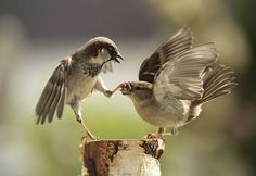 STOP YER CHIRPIN!!!!  25 Animals Captured doing Uncommon Moves | http://blog.piktureplanet.com/animals-captured-doing-uncommon-moves/