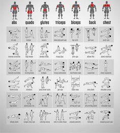 Exercices musculation - Tuxboard