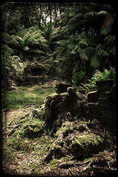 I have been there super beautiful but eerie! Beautiful Places To Visit, Great Places, Places To See, Tasmania, Living In Adelaide, Van Diemen's Land, Australia Landscape, Gold Coast Australia, Aussies