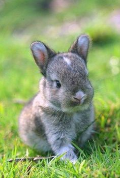 Cute animal pictures: 100 of the cutest animals! - sofeminine.co.uk
