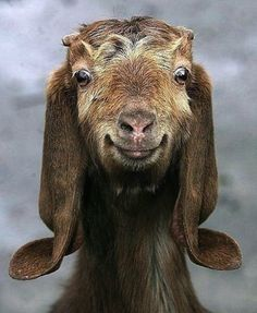 30 Ridiculously Photogenic Animals | Blaze Press