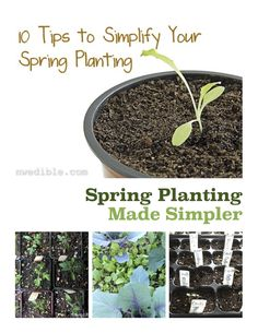 Can't keep up? Simplify your spring planting with these ten tips.