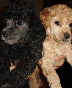 Animali e cuccioli