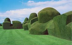 yew hedges | chirk castle ~ malcom kirk photograph