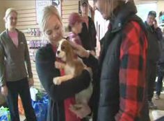 Fox 6 Birmingham: A very dedicated group of rescuers made it their mission to purchase as many Cavalier King Charles Spaniel dogs from an Alabama breeder as they could. King Charles Spaniel, Cavalier King Charles, Cavalier Rescue, Fox 6, Spaniel Dog, Couple Weeks, Loyalty, Birmingham, Alabama