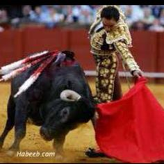 You'll find a Matador at home in Spanish stadiums waving his red cape about to taunt and tease a bull into charging. The sport of bull fighting. Matador Costume, Flamenco Dancers, Beautiful Dream, Travel Themes, Picasso, Trick Or Treat, Garland, Halloween Costumes, Culture