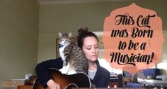This Cat Was Born TO Be A Musician!