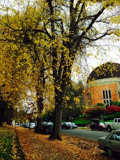 Fall in NW Portland is amazing