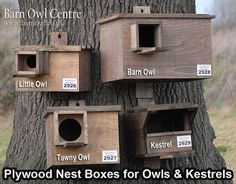 Owl Boxes.  This site is from England.  In Michigan we have the screech owl, which requires a 3 inch hole.  Box should be 10 to 30 feet off ground.  Box must be water tight.  We need owls to keep those little pesky chipmunks and such in check.  Think owl! in your backyard.