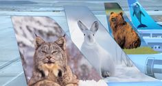 frontier airlines - Google Search