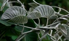 Un libro sobre plantas medicinales. Efesalud.com.  http://www.farmaciafrancesa.com/main.asp?Familia=189&Subfamilia=223&cerca=familia&pag=1