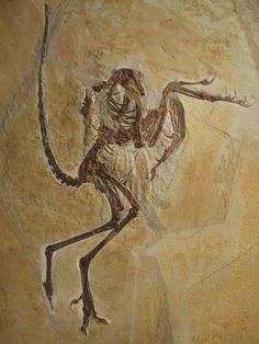 The Bürgermeister Müller Museum in Solnhofen displays the history of lithography, the story of the limestone quarries and the spectacular fossil finds from the area, including the most recently discovered Archaeopteryx specimen
