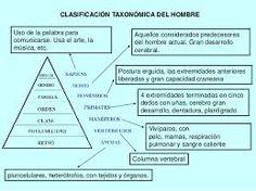 1.7.- CLASIFICACIÓN TAXONÓMICA DEL HOMBRE