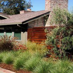 ...plant native grasses ifor a modern landscape