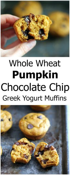 Delicious Whole Wheat Pumpkin Chocolate Chip Muffins - made with greek yogurt, no butter and sweetened naturally with honey.