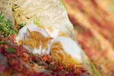 Koty najpiękniej mruczą jesienią...
