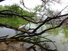 Thol lake pictures http://proindian.in/577/thol-lake-bird-sanctuary-photographs