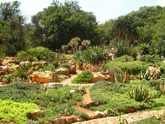 For a great escape from the bustle of Johannesburg without having to venture too far, head to the Walter Sisulu Botanical Gardens. Kruger National Park, National Parks, National Botanical Gardens, Port Elizabeth, Garden Images, Most Beautiful Cities, South Africa, Places To Go, Tourism