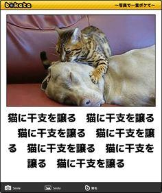 猫に干支を譲る 猫に干支を譲る 猫に干支を譲る 猫に干支を譲る 猫に干支を譲る 猫に干支を譲る 猫に干支を譲る