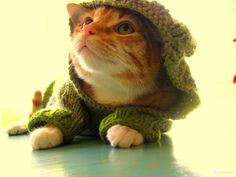 Cats with clothes or without?
