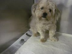 Hempstead  Stray Animals (Currently housed at the ToH Animal Shelter) Animal ID	23389104  Species	Dog  Breed	Lhasa Apso/Terrier, Tibetan  Age	2 years  Sex	Male  Date Found	7/22/2014  Size	Small Color	Beige Location	Front Hallway Weight	16.4 pound Declawed	No Report Type	Animal in Custody