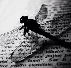 Image uploaded by butterfly ∞. Find images and videos about vintage, words and book on We Heart It - the app to get lost in what you love. Mother Earth, Mother Nature, Dragonfly Quotes, Dragonfly Insect, Wild Creatures, Color Photography, Spirit Animal, Find Image, Illustration Art