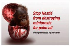 Not only are Nestle and many other brands are not only destroying forests but causing organutans to get close to extinction