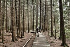 """Burns Bog walk aims to raise awareness of """"lungs of Lower Mainland"""" 