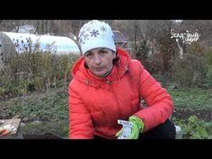 """Подзимний посев. Сеем под зиму. Сайт """"Садовый мир"""" - YouTube"""