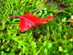red leaf,green moss.