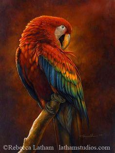 Scarlet Macaw Preening by Rebecca Latham - small.jpg | Flickr - Photo Sharing!