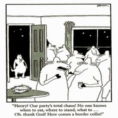 Gary Larson - The Far Side.I used to have border collies as a kid, and found this too funny! Far Side Cartoons, Far Side Comics, Funny Cartoons, Funny Comics, Cartoon Humor, Haha Funny, Funny Dogs, Funny Stuff, Funny Things